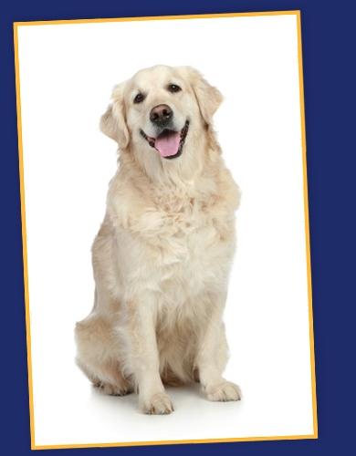 salters-senior-dog-food
