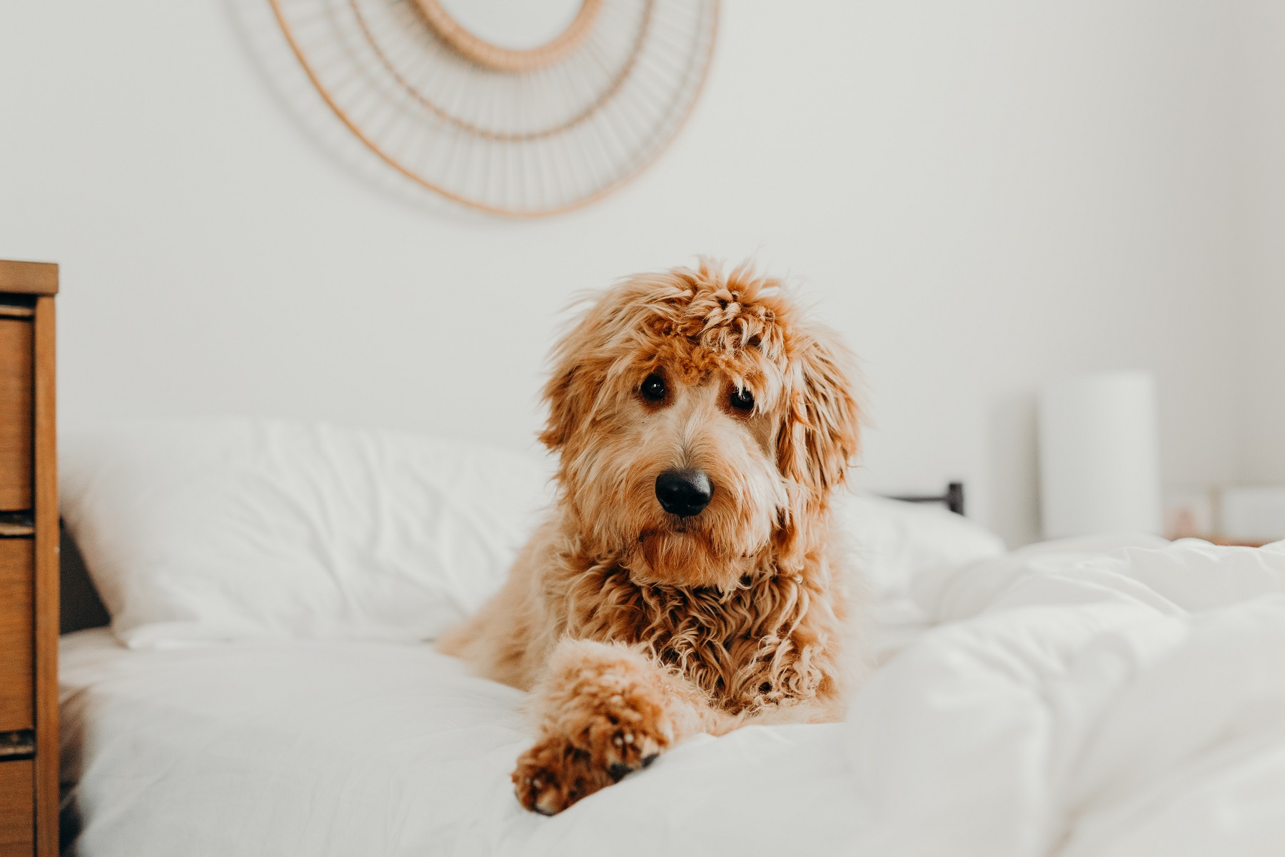 image of a dog laying on a bed