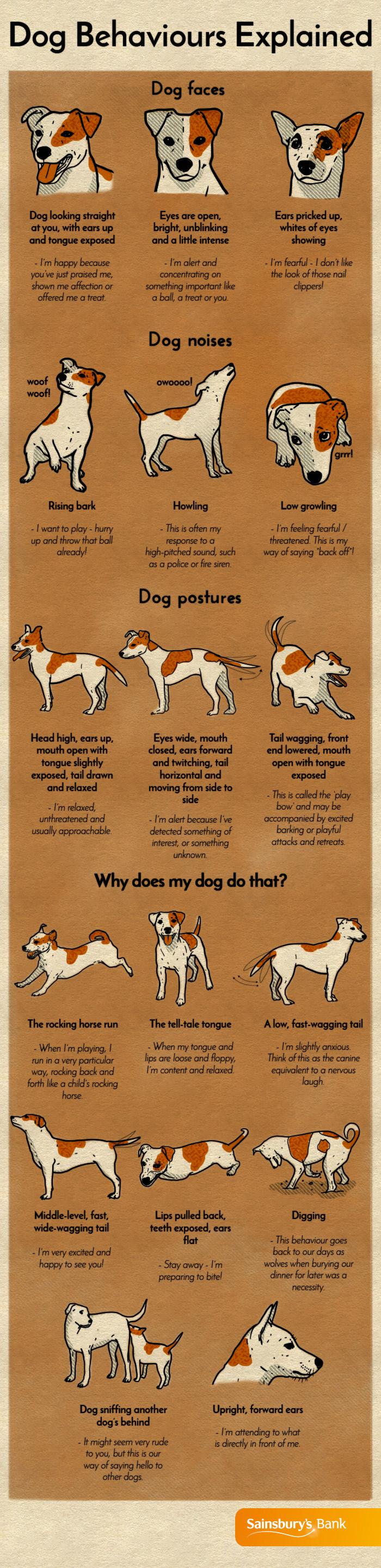 dog-behaviours